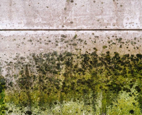 Mold Inspection Testing Services